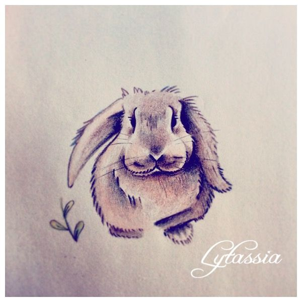 Bunny rabbit drawing coloured pencil @lytassia