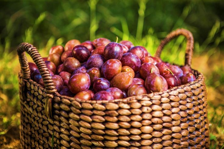 Dried Plum Health Benefits and Facts | California Dried Plums