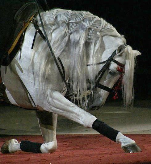 Wow! If I was wearing a hat, I would take it off to the extremely talented person who braided this horse's mane! Incredible!
