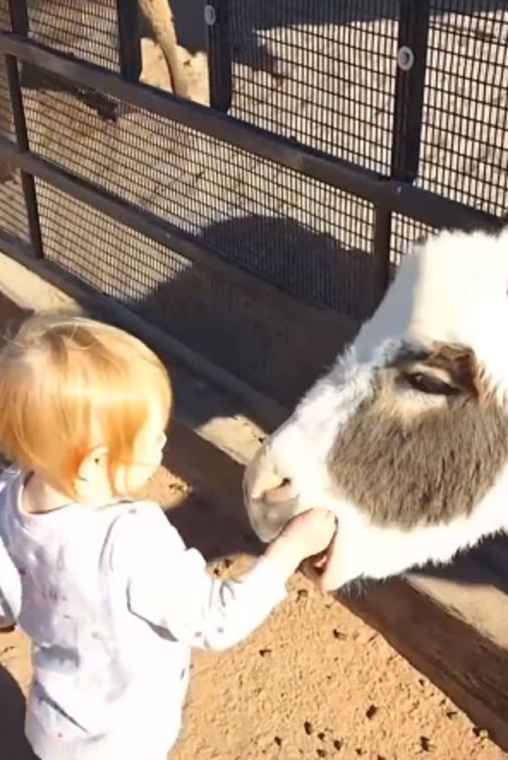 Funny Kids Vs Zoo Animals Are Way Funnier Try Not To Laugh Video