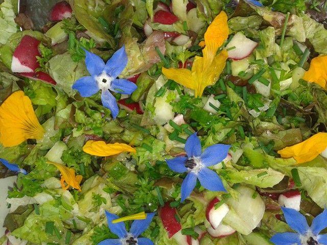 Sla, radijs, bieslook, peterselie en... komkommerkruid en Oost-Indische kers - uit de eigen achtertuin; maken een bloemrijke salade!
