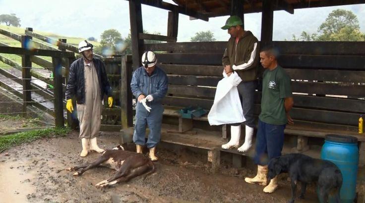 Surto de raiva atinge e mata animais em fazendas de Jacutinga MG