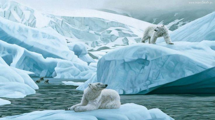 Góry, Lodowe, Niedźwiedzie, Polarne