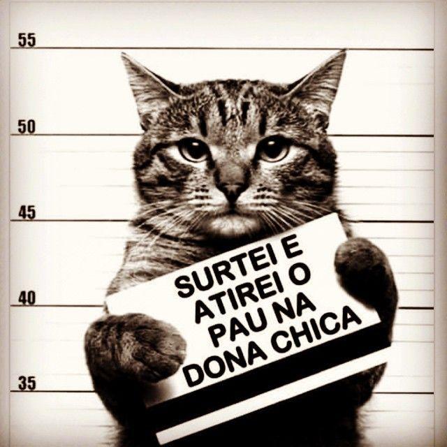 Imagem e Frases Facebook: Vai Atirar o Pau no Gato!