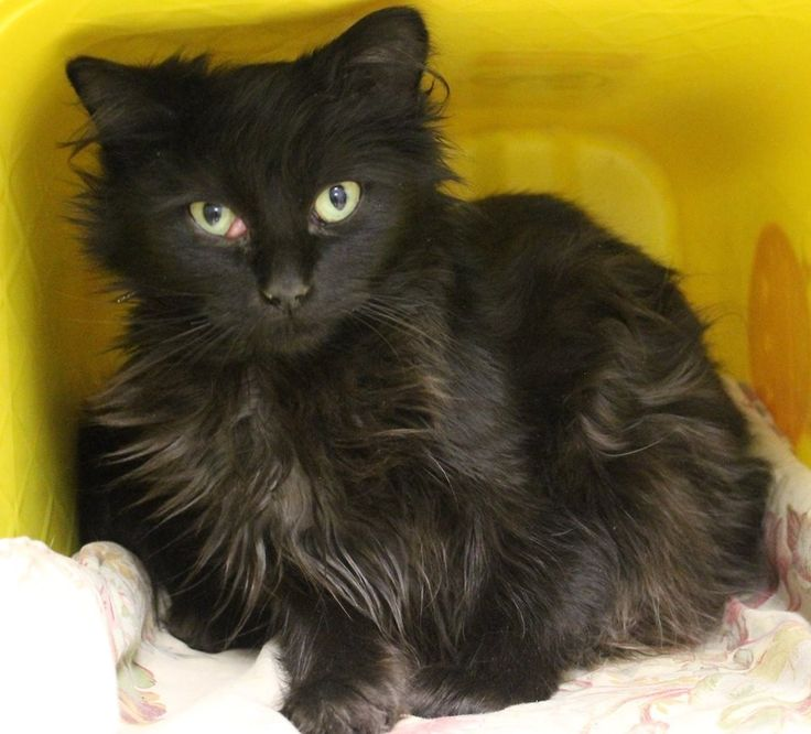 Intake: 5/4 Available: Now  NAME: Berto  ANIMAL ID: 35264612 BREED: DMH SEX: Male  EST. AGE: 1 yr Est Weight: 5 lbs Health: OD with mild blepharospasm and chemosis of the third eyelid only. no discharge. stained eye with fluorescein stain and proparacaine. Temperament: Friendly ADDITIONAL INFO: O/S  RESCUE PULL FEE: $35