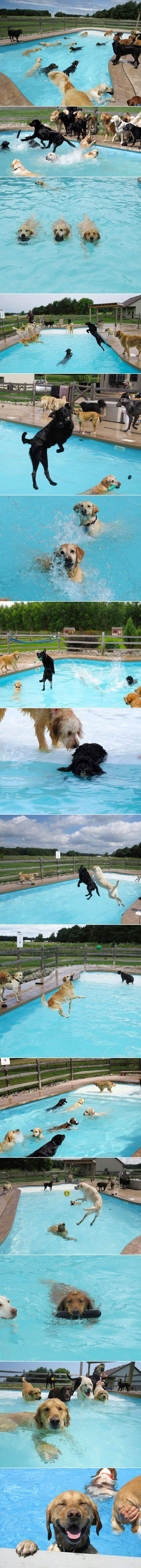Die Hunde-Pool-Party | Webfail - Fail Bilder und Fail Videos