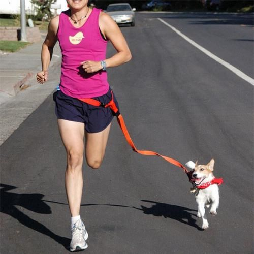 Like to jog with your dog but want to keep your hands free? Then Check out The Pet Habitat Store's Jogging Leash - The Pet Habitat Store