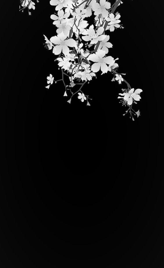 Fond D Ecran Noir Et Blanc Avec Fleurs De Cerisier Fleur Noir Et Blanc Fond Noir Et Blanc Papiers Peints Esthetiques