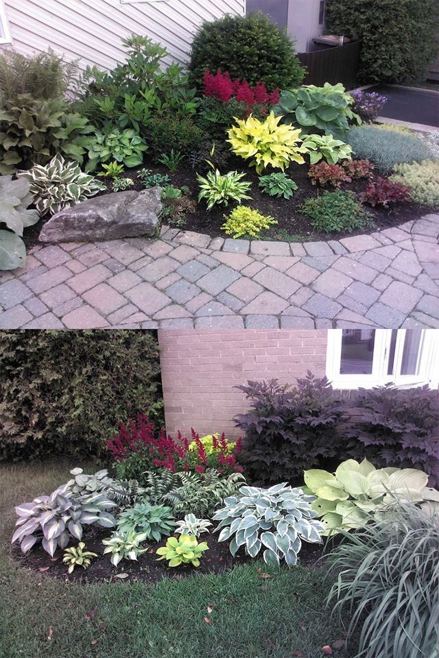 More planting ideas for low maintenance for the front yard for Front lawn plant ideas