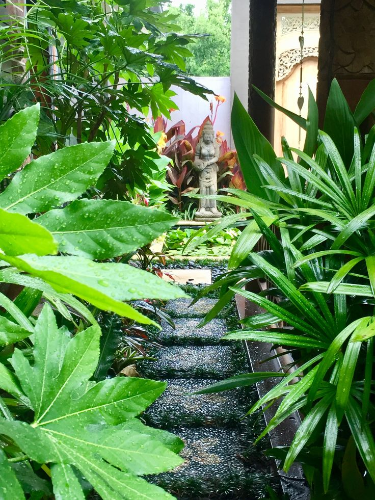 how to make a tropical garden in melbourne