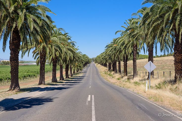 Date Palm Road