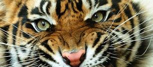 Auburn Tigers - Auburn University Official Athletic Site - Facilities