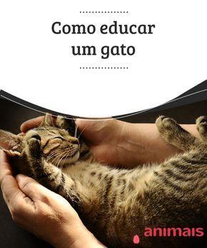 Como educar um gato  Existe o #mito de que os #gatos são incontroláveis, coisa que não é #verdade, de forma alguma. O que acontece é que há uma confusão de termos, uma coisa é #educar um gato para conseguir uma #convivência sadia e #pacífica com ele e os membros da sua casa, e outra coisa é adestrá-lo para que faça truques.
