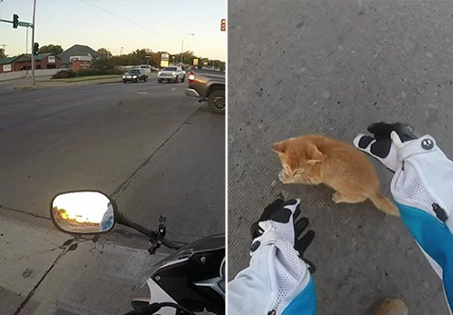O que você faria se visse um gatinho bastante confuso no meio de um conturbado cruzamento de veículos? Quando esta motociclista norte-americana percebeu a pequena bolinha de pelos tentando se esquivar dos carros, ela não teve dúvidas: parou o trânsito para realizar o resgate. O vídeo, que gravou com uma câmera em seu capacete, mostra o momento em que o gatinho sai debaixo de um carro para o meio da rua e ela decide intervir. A motociclista sai de sua moto e entrega o filhote para uma…