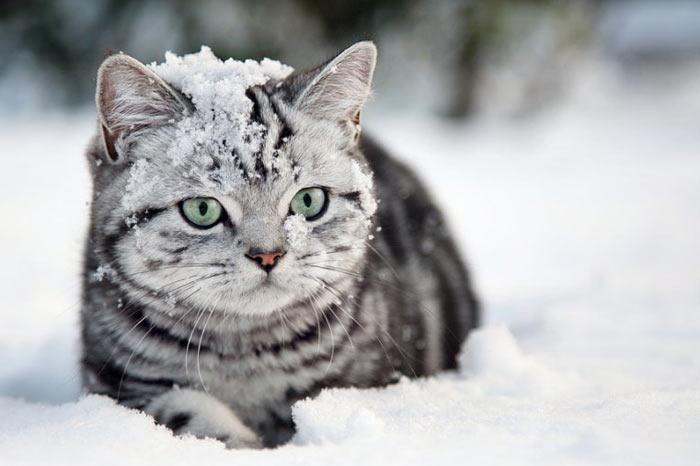 「猫は寒いが苦手というのは都市伝説やったんや!」 と言いたくなる画像集 - 〓 ねこメモ 〓
