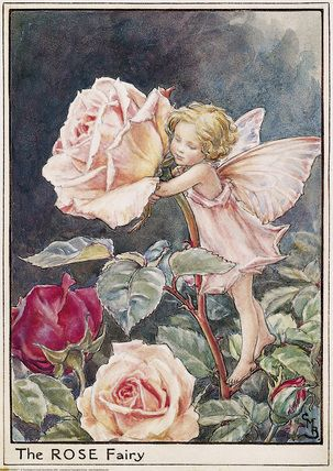 Illustration for the Rose Fairy from Flower Fairies of the Summer. A little girl fairy stands facing left on a rose leaf with her arms around the stem.  The Rose fairy was first published in Flower Fairies of the Garden, 1944.  										   																										Author / Illustrator  								Cicely Mary Barker