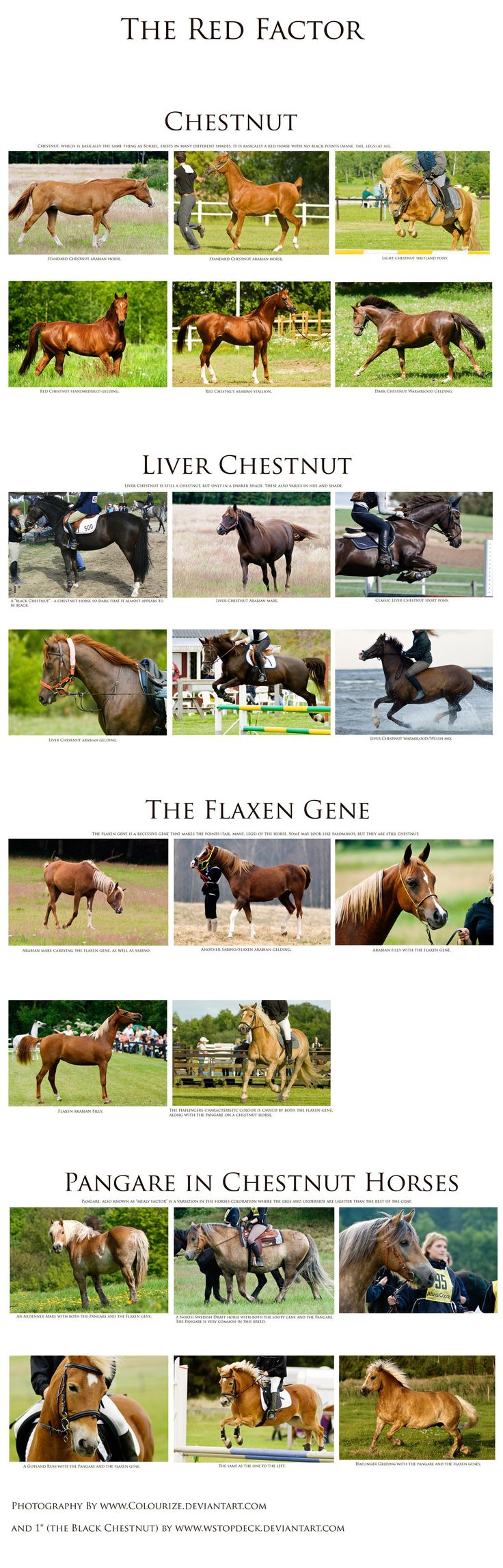 46 best horse color chart images on pinterest color charts chestnut reference sheet by colourize stock on deviantart other reference for find this pin and more on horse color chart nvjuhfo Choice Image
