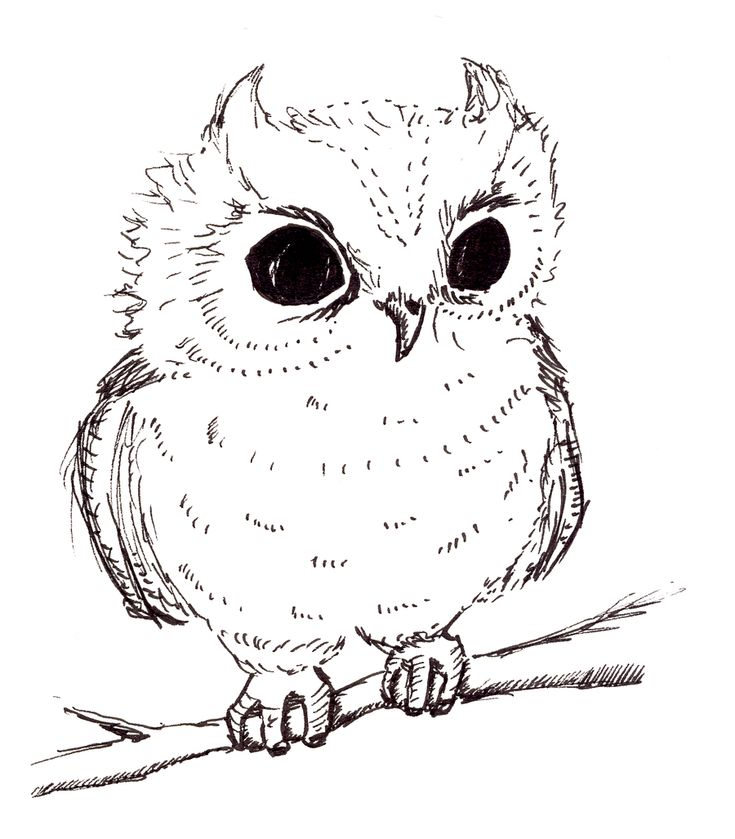 Owl drawings black and white