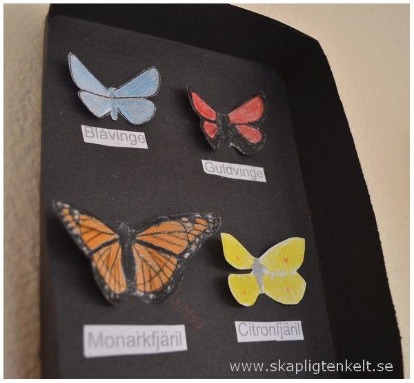 Skapligt Enkelt: Fjärilsutställning