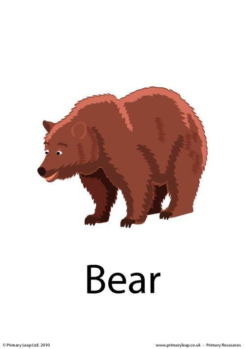 366199013421031897 on Brown Bear