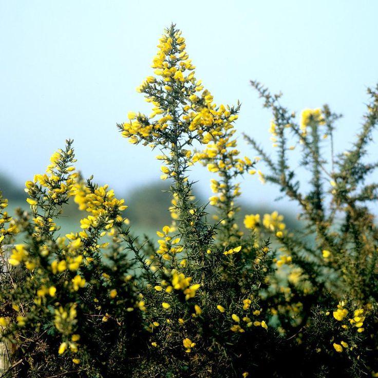 131 best plantes fleurs arbres et arbustes images on for Plantes et arbustes
