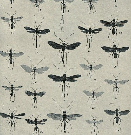 antique insect paper...are the insects anique or the paper?