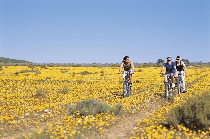 When planning a holiday to South Africa, known as 'a world in one country', it can sometimes be difficult to choose where to start. This 15-night itinerary provides you with a snapshot of what this amazing country has to offer. Starting with an exciting safari in the Kruger National Park and then embarking on a self-drive tour along the picturesque Garden Route, venturing onwards to explore the winelands of Franschhoek before ending your holiday with a few nights in the vibrant city of Cape…