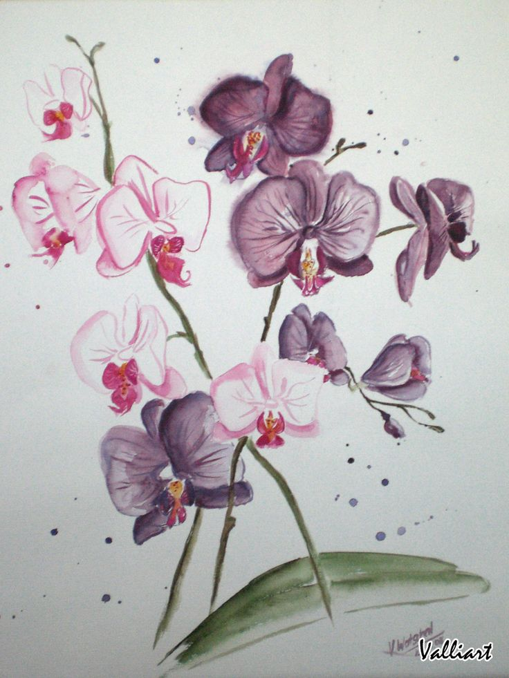 Orchid Drawing: quoteko.com/orchid-drawing.html