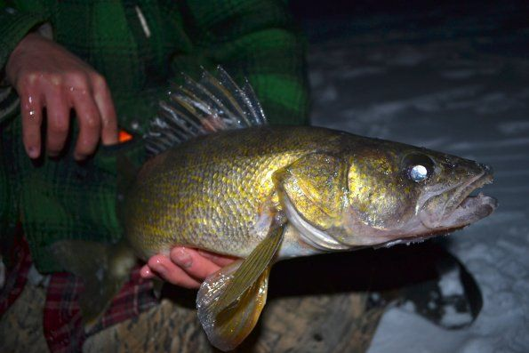 Good ole otter tail the outdoor report ice fishing in for Otter ice fishing