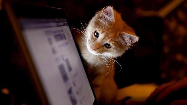 Facebook: tra 83 milioni di profili falsi anche tanti cani e gatti. Ecco chi sono