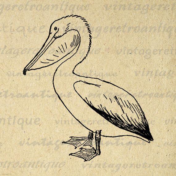 Printable Pelican Bird Image Graphic by VintageRetroAntique