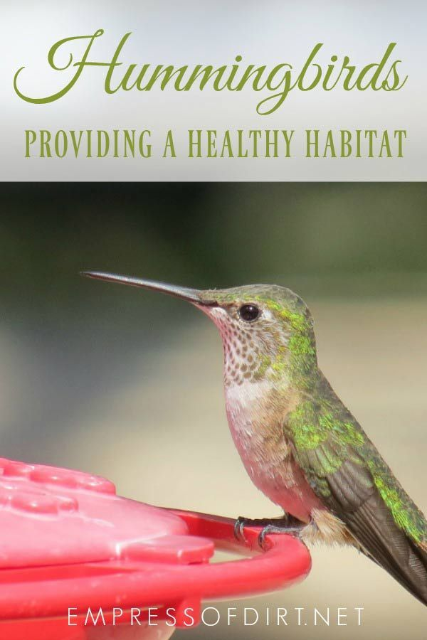 How To Make Sugar Water For Hummingbirds Empress Of Dirt How To Attract Hummingbirds Sugar Water For Hummingbirds Humming Bird Feeders