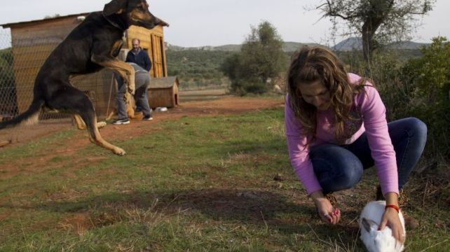 There are a few reasons why this experience put a smile on our face. http://combadi.com/345-agrotourism-greece-eco.html