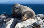 Finally, a Galapagos Trip You Can Afford