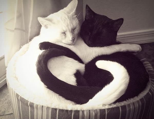 kors michael kors: Black N White, Kitty Cat, Black And White, Yinyang, Valentines Day, Black White, Cat Lovers, Yin Yang, White Cat