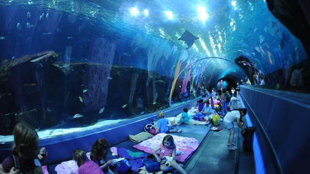 Have a sleepover with over 100,000 animals and under 10 million gallons of water!
