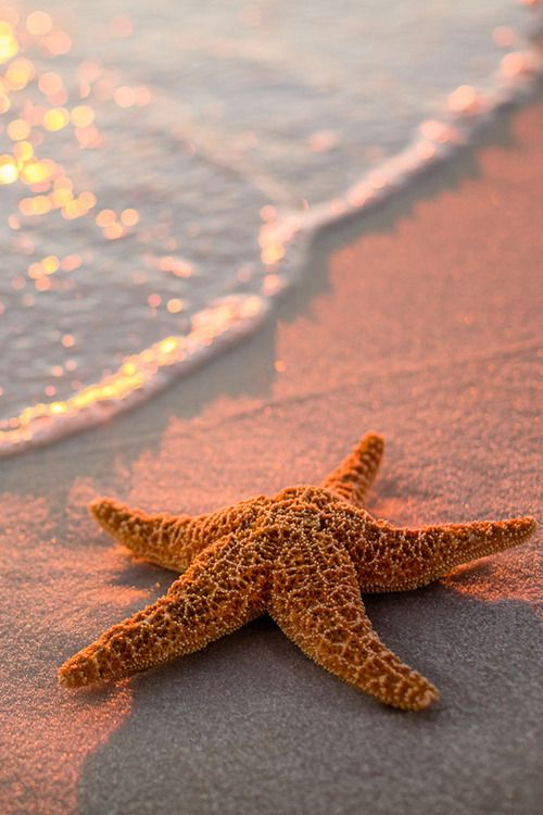 that would be awesome to find a starfish that big