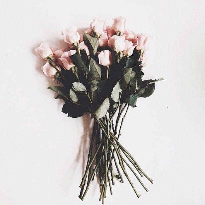 flower, pink,