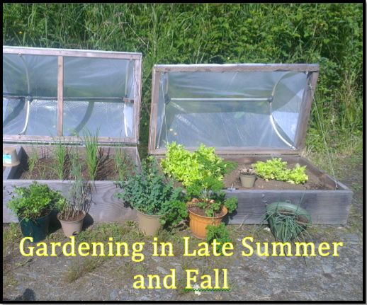 403 best gardening tips info images on pinterest gardening tips edible garden and veggie - Gardening in summer heat a small survival guide ...