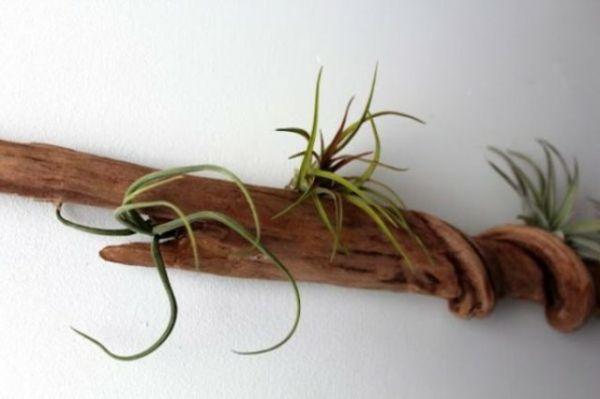 treibholz an der wand grüne pflanzen - Wunderbare Treibholz Deko, die auch praktisch sein kann – 45 verblüffende Ideen