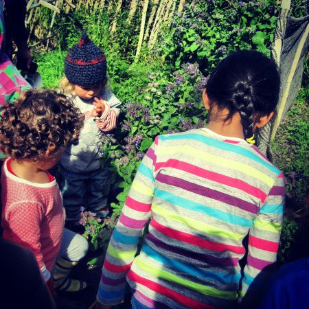 Picking and tasting Borage flowers - Kids Forage and Harvest in Cape Town
