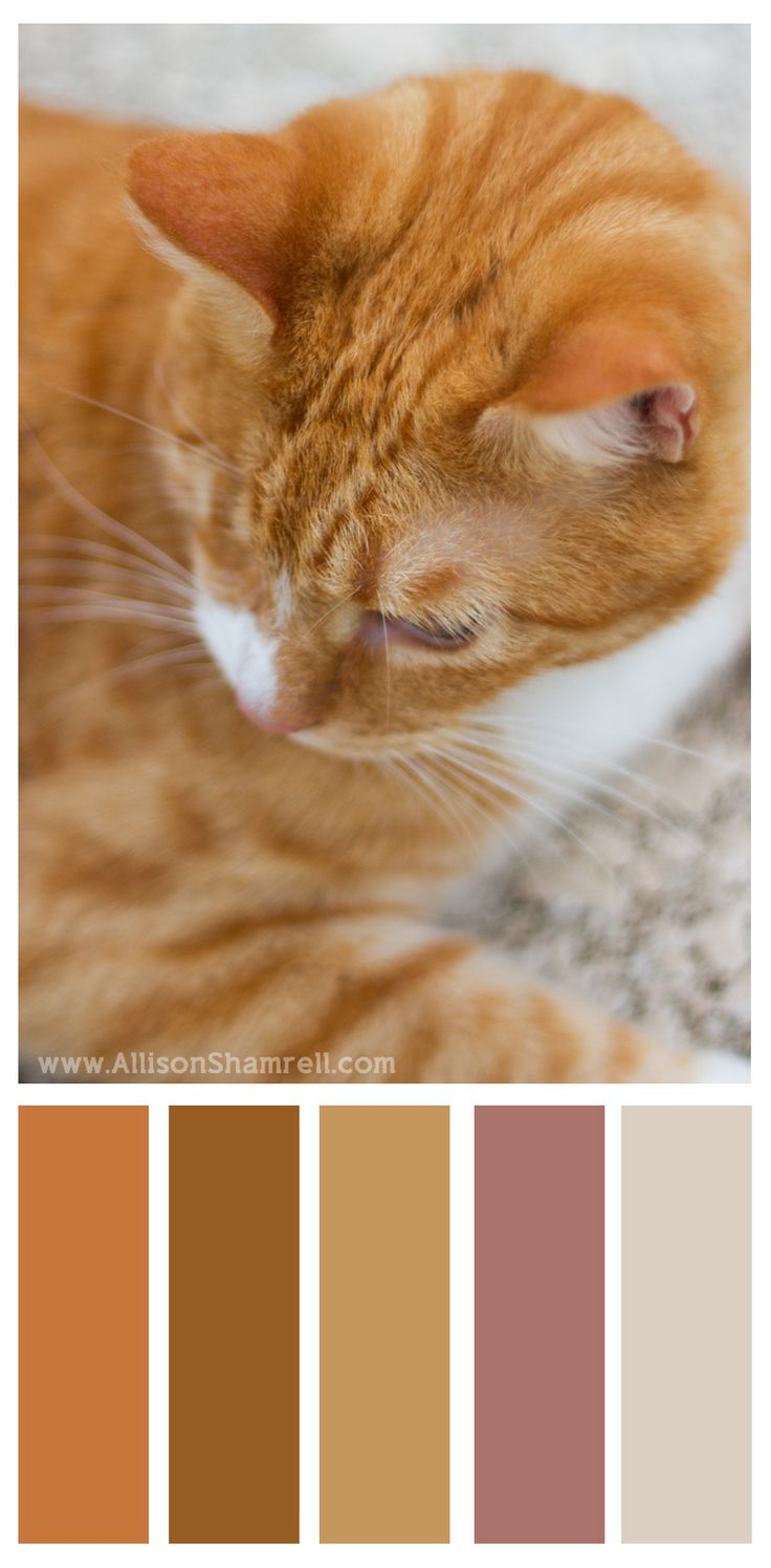 Color palette for Beebee the cat