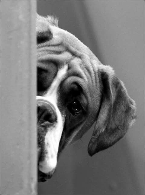"""""""It's time to go to bed.  Aren't you coming?""""  (boxer)"""