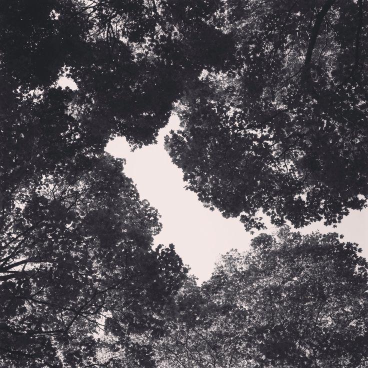 Looking up, Skedsmo