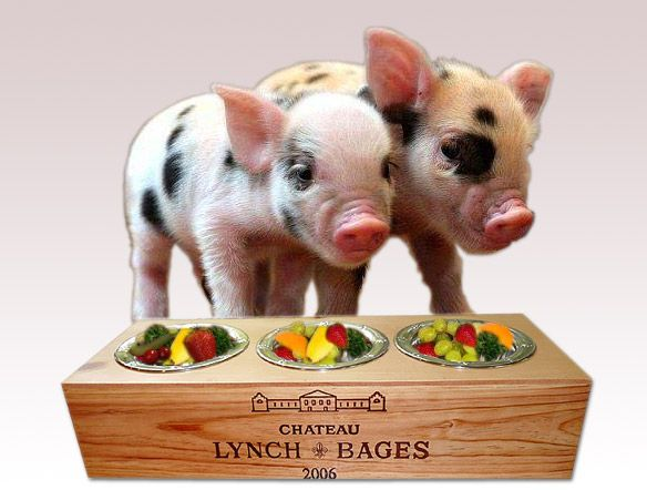 Miniature Pigs | How To Care For Your Teacup Mini Pig | PRLog