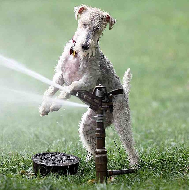 17 Best Images About Dogs Playground On Pinterest Parks