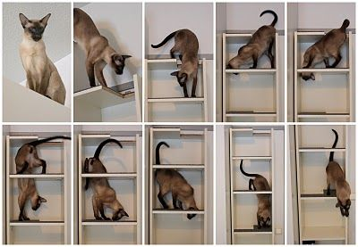 Cat climbing shelf in one compact Billy  http://www.ikeahackers.net/2010/02/cat-climbing-shelf-in-one-compact-billy.html