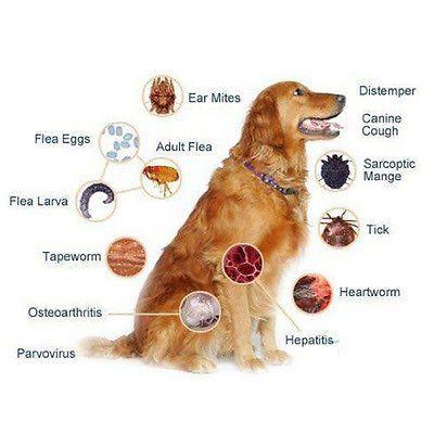 Dog Tick Tablets