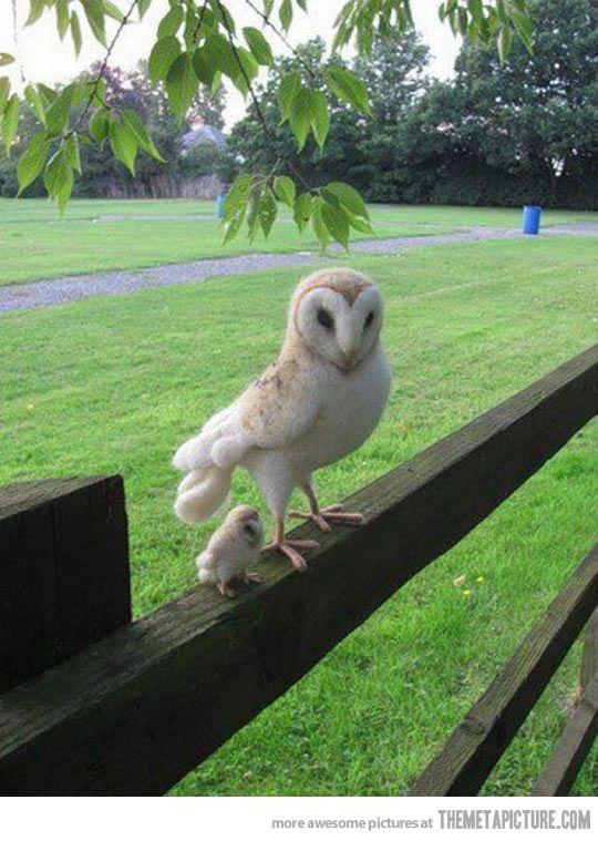 Mom and Baby Owl… eeee