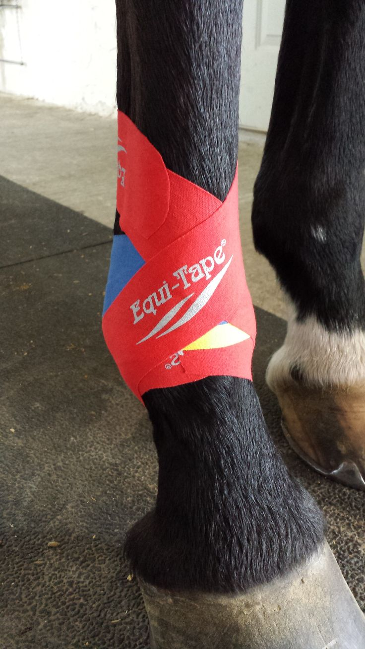 Equi-Tape Ankle Taping | Equi-Tape | Horse therapy, Horse ...